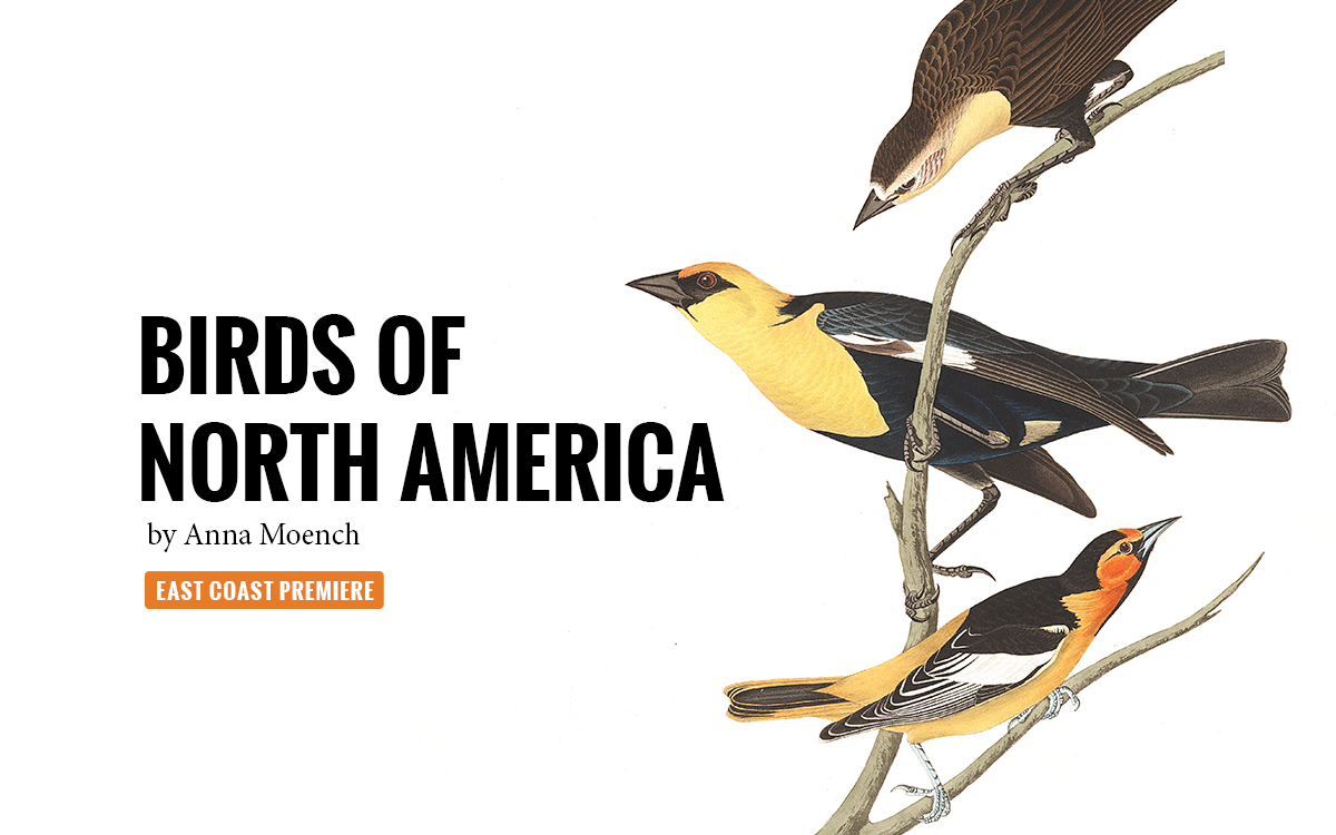 Birds of North America by Anna Moench